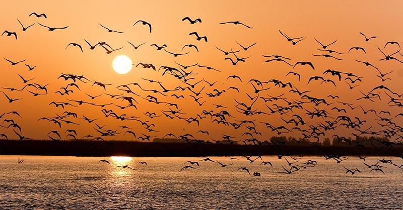 Quinto día: Peces y aves