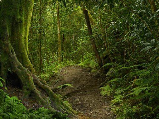 Tercer día: Tierra y vegetación