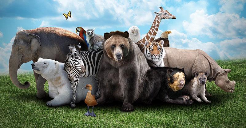 Sexto día: Animales y ser humano